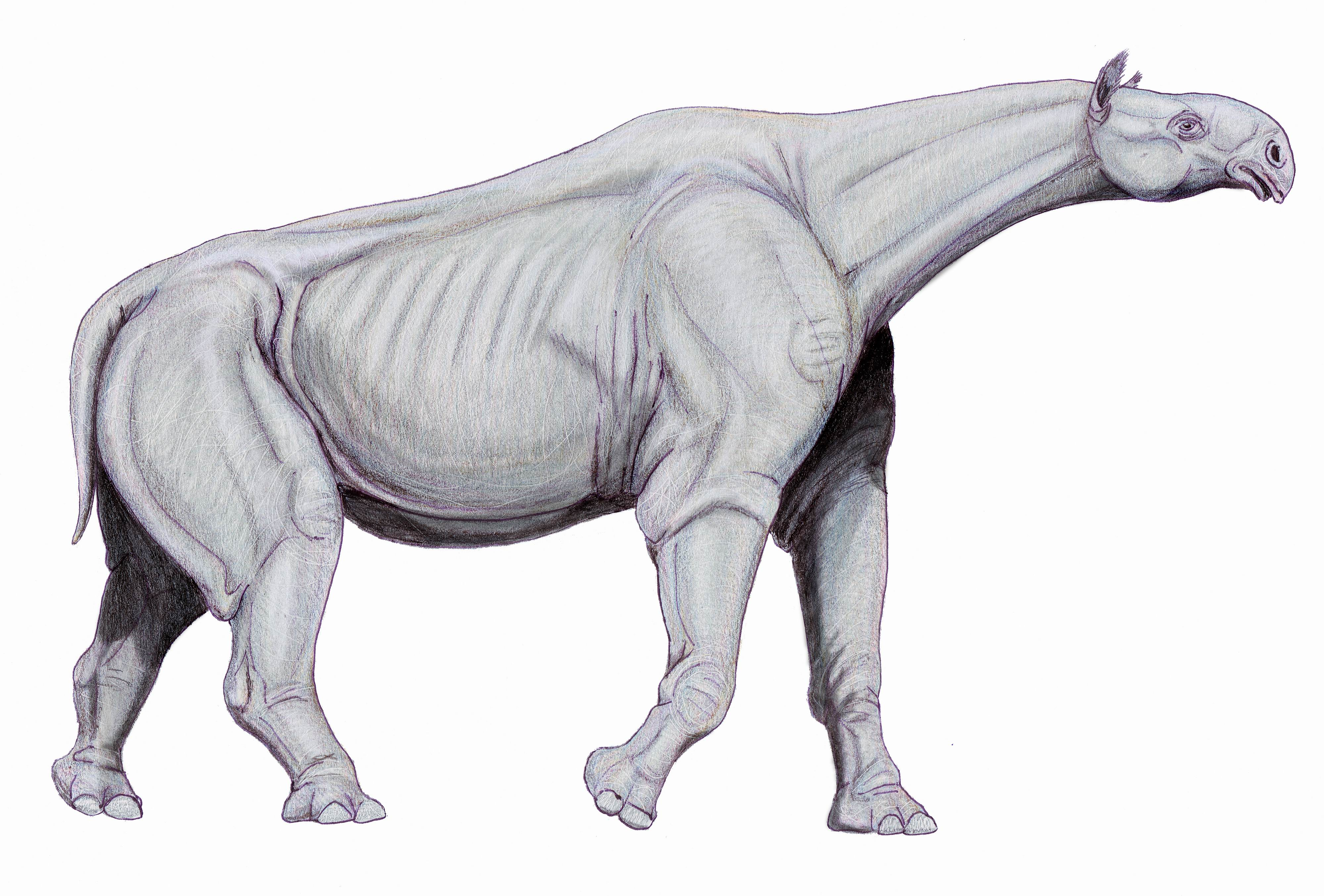 A sketch of the Indricotherium
